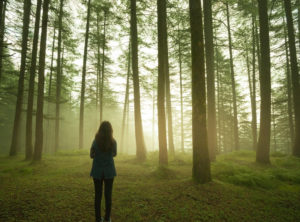 Outdoor silhouette image of a girl standing alone in pine forest